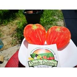 """Semi di pomodoro """"Cuor di bue"""" 1.75 - 3"""