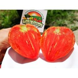 Graines de Tomate Coeur de Boeuf 1.75 - 4
