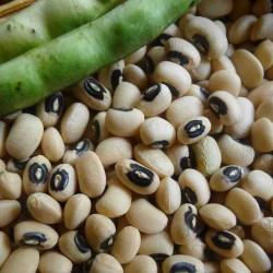 Semillas de Fríjol Cabecita Negra, Carilla 2.5 - 2