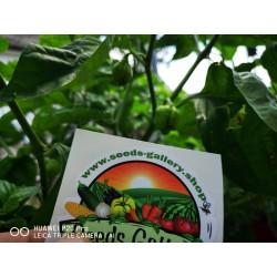 Σπόροι Τσίλι πιπέρι Carolina Reaper κόκκινο και κίτρινο 2.45 - 15