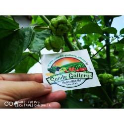 Σπόροι Τσίλι πιπέρι Carolina Reaper κόκκινο και κίτρινο 2.45 - 17
