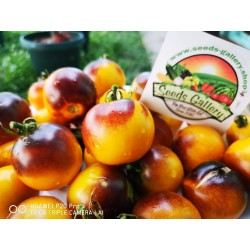 Wagner Blue Yellow Tomato Seeds 2.25 - 4