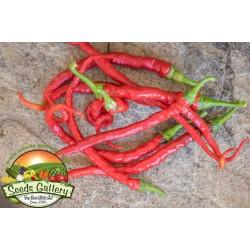 Süßer Chili Samen PITON - PYTHON 1.65 - 4