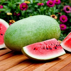 Charleston Gray Watermelon Seed 1.95 - 2