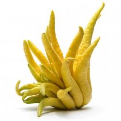 Fingercitron Frön (Citrus medica var. sarcodactylis) 0 - 7