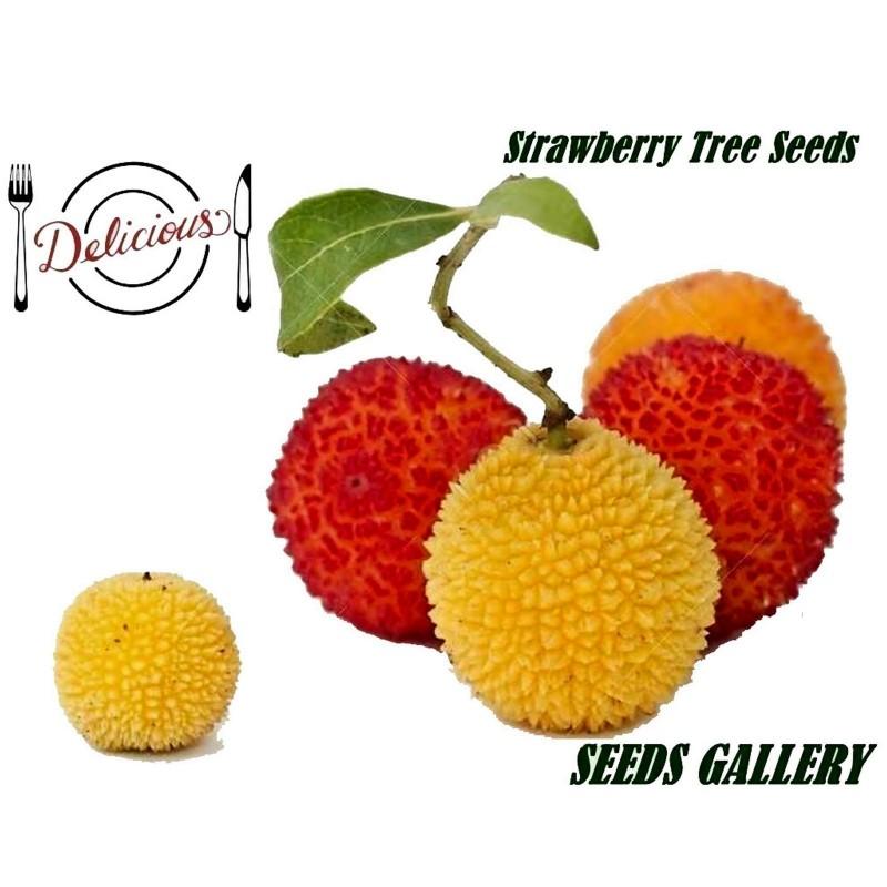 Semillas de Madroño frutos deliciosos (Arbutus Unedo) 1.75 - 1
