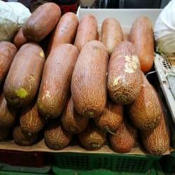 Graines de Concombre Poona Kheera 2.35 - 1