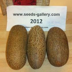 Poona Kheera Cucumber Seeds 2.35 - 2