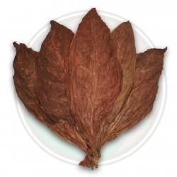 Kub. Criollo 98 tobaksfrön 2.5 - 1