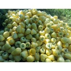 Somborka paprika seme 1.85 - 8