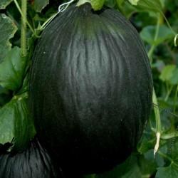 Graines de Melon Noir 2.45 - 3