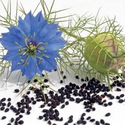 Semillas de Ajenuz o Comino Negro (nigella sativa) 2.45 - 1