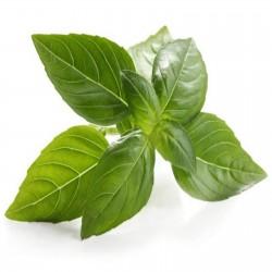 Basilikum Saatgut MIX 4 verschiedenen Sorten 2 - 3