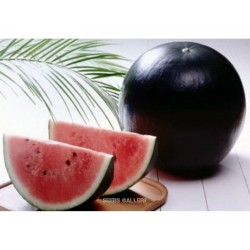 Black Sweet Watermelon Seeds
