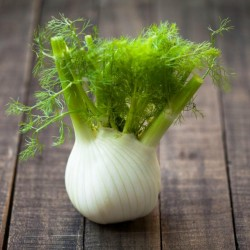FLORENCE Fennel Seeds large bulbs 1.85 - 1