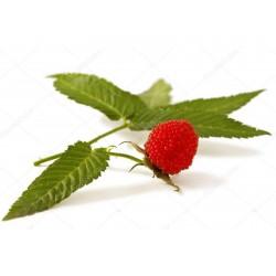 Malina-Jagoda Seme (Rubus illecebrosus) 0 - 3