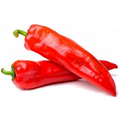 MARCONI RED Sweet Pepper Seeds