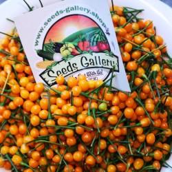 5 Fruits Charapita frais aux graines - Offre à durée limitée 10 - 1