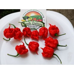 Carolina Reaper Seeds Red or Yellow Worlds Hottest 2.45 - 3