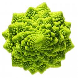 Semillas de Broculi Verde Romanesco 2.75 - 2