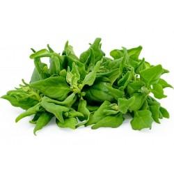 Neuseeländer Spinat Samen (Tetragonia tetragonoides) 1.85 - 1