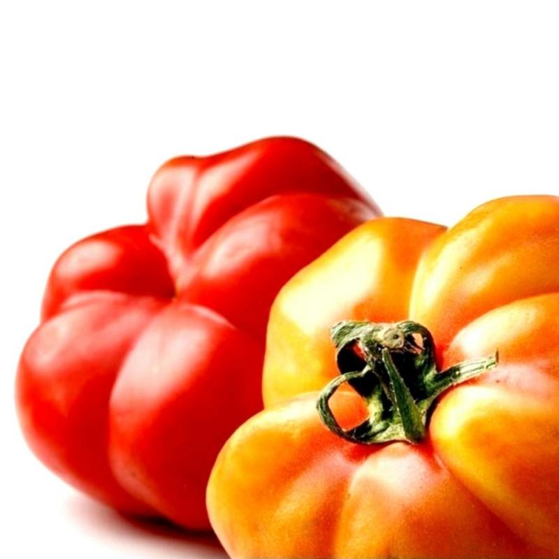Seme paradajza Montserrat 1.95 - 1