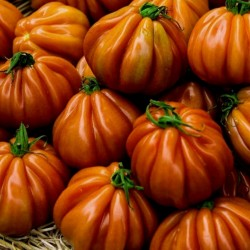 Semi di pomodoro CHARLIE CHAPLIN 1.95 - 1