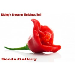 "Chili Seme ""Bishops Crown"""