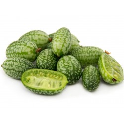 Cucamelon seeds - Mexican Sour Gherkin Cucumber 1.85 - 1