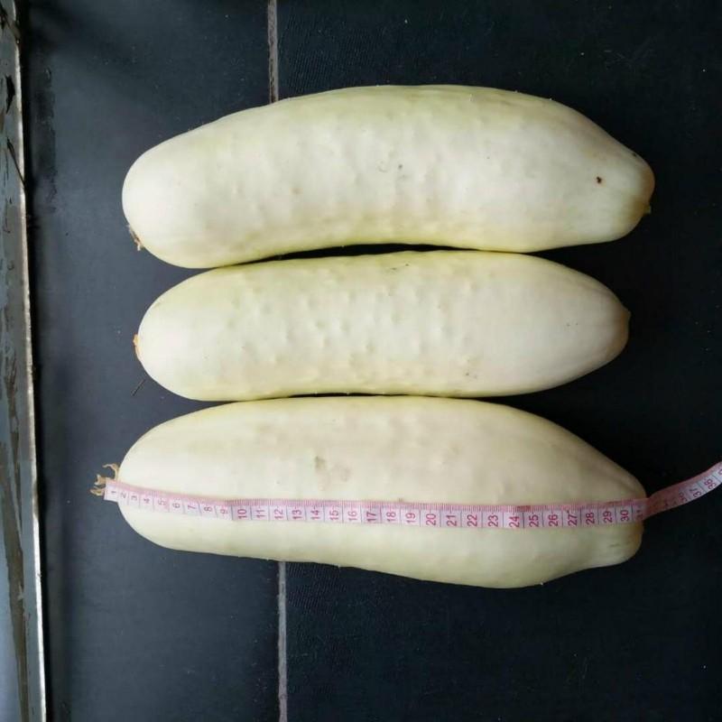 White Wonder Weiße Gurke Samen 1.8 - 1