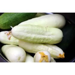 Semillas de Pepino Blanco 1.8 - 2