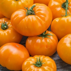 Orange Beefsteak Heirloom Tomato Organic Seeds 2.15 - 1