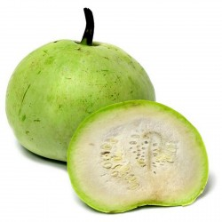 Tinda Seeds, Apple Gourd (Praecitrullus fistulosus) 2.35 - 1