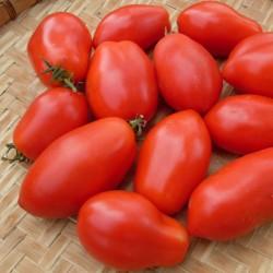 Graines de tomate Napoli 1.85 - 2