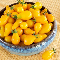 Yellow Pear Tomato Seeds 1.95 - 4