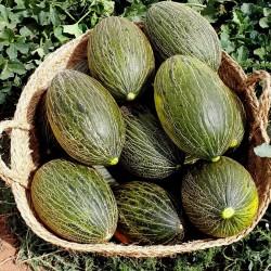Piel de Sapo Melon Seeds (Cucumis melo) 1.849999 - 2