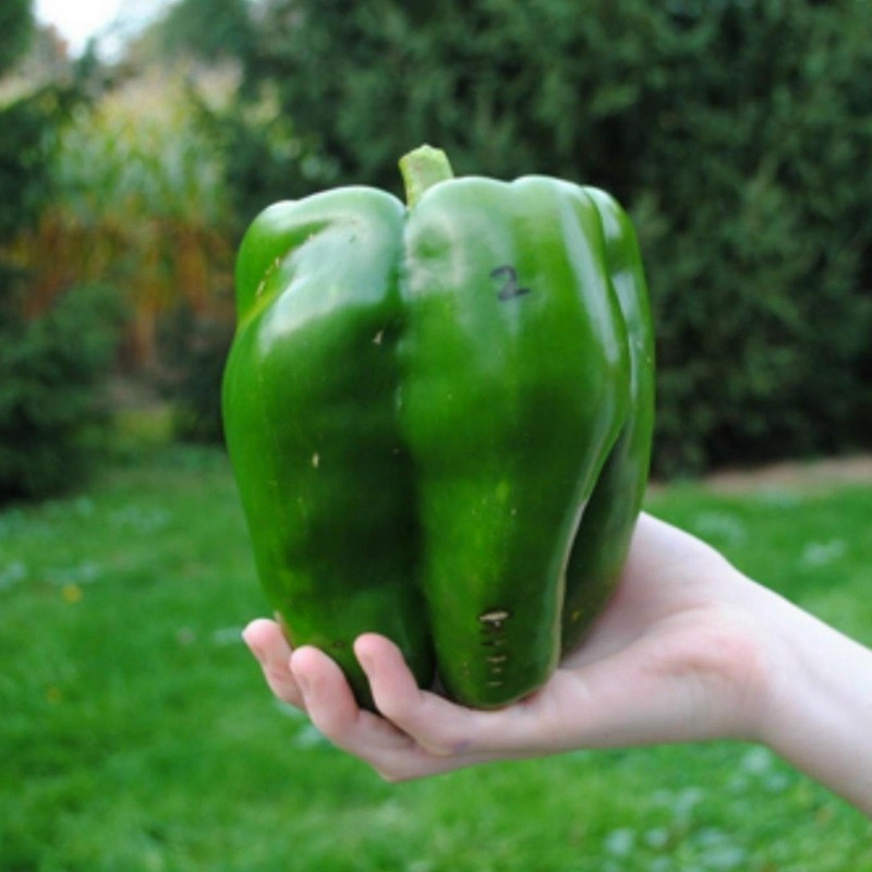 Red Monster Giant Sweet Pepper Seeds 1.85 - 1
