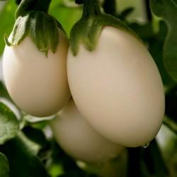 Graines de Aubergine plante à oeuf (Solanum Melongena) 1.85 - 2