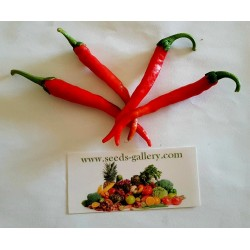 Chili Cayenne Long Slim Seeds