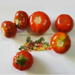 Semi Melanzana rossa di Rotonda (Solanum aethiopicum) 1.95 - 2