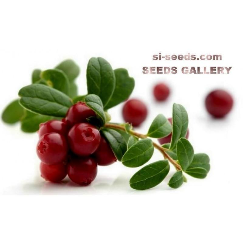 Graines de Cranberry - Canneberge