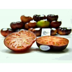 Mar Azul tomato seeds 1.75 - 7
