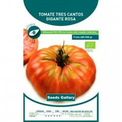 Σπόροι ντομάτας Tres Cantos