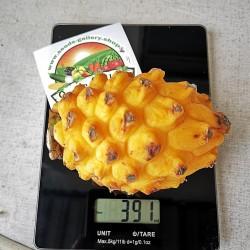 Σπόροι Δράκος Φρούτα Κίτρινο 2.5 - 2