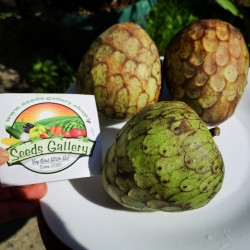 Sugar Apple, Cherimoya Seeds (Annona cherimola) 1.95 - 2