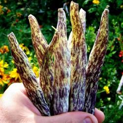 Semillas Haba Merveille de Piemonte 2.5 - 2