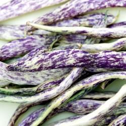 Graines de Haricot Merveille de Piemonte 2.5 - 3