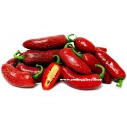 Sementes de Early Jalapeno Pepper Pimenta Rápida Colheita 1.6 - 1