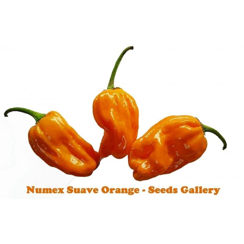 Chilli Numex Suave Orange Samen