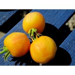 Semi di Pomodoro Garden peach (pesca del giardino)
